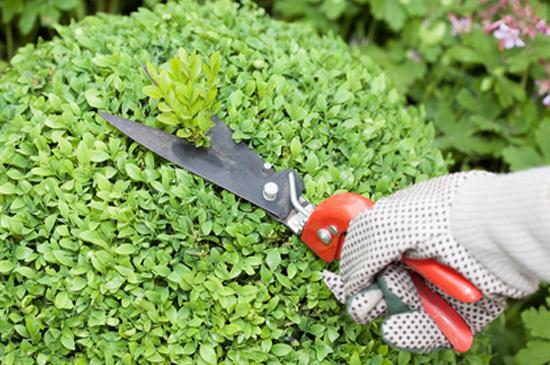 Gartenpflege vom Gärtner in München